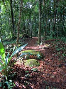 Path through the farm
